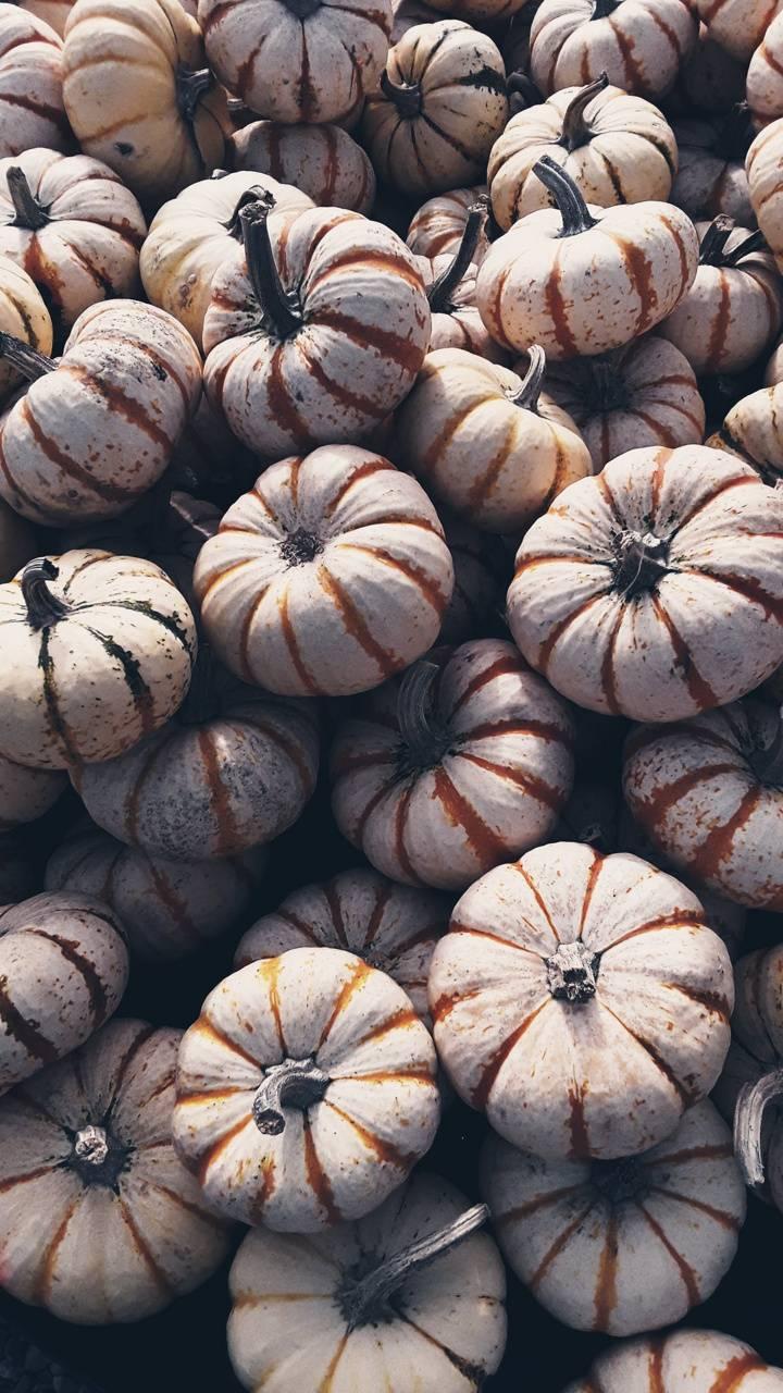 Pumpkin Grey