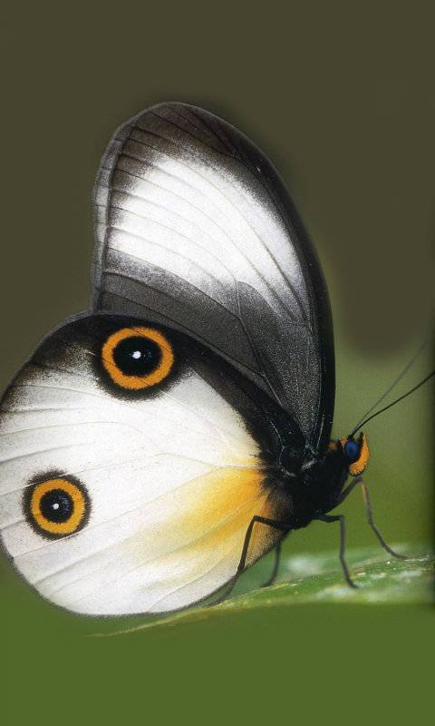 lovely butterfly