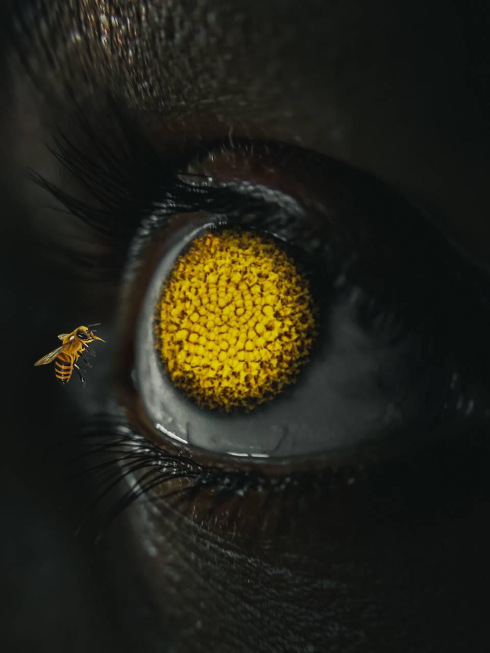 Editing eye