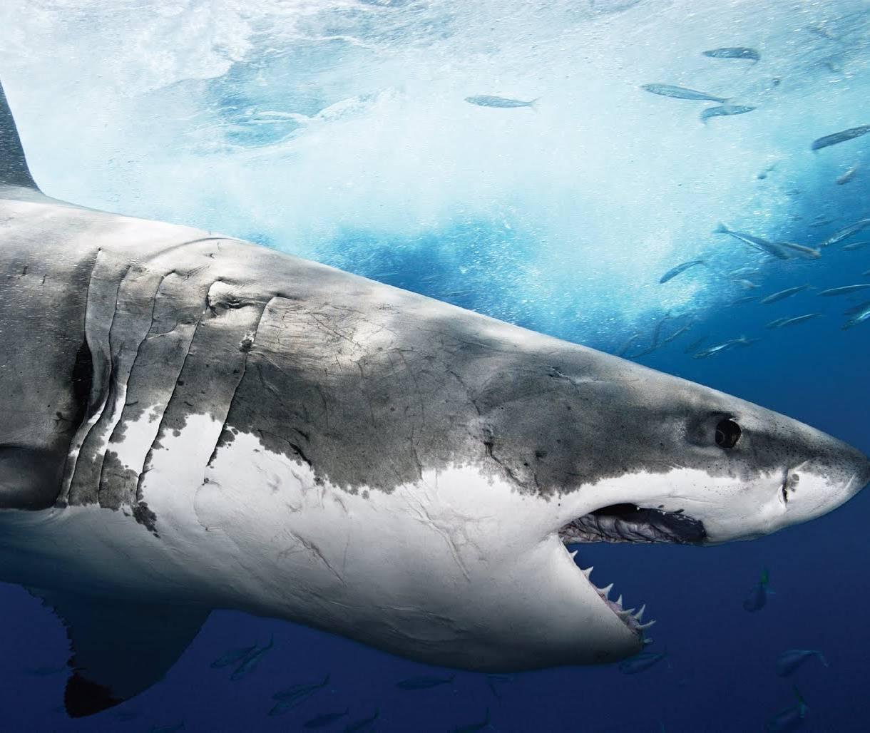 Suuper Sneaky Shark