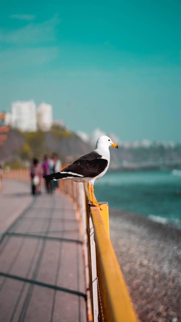 Bird Kus