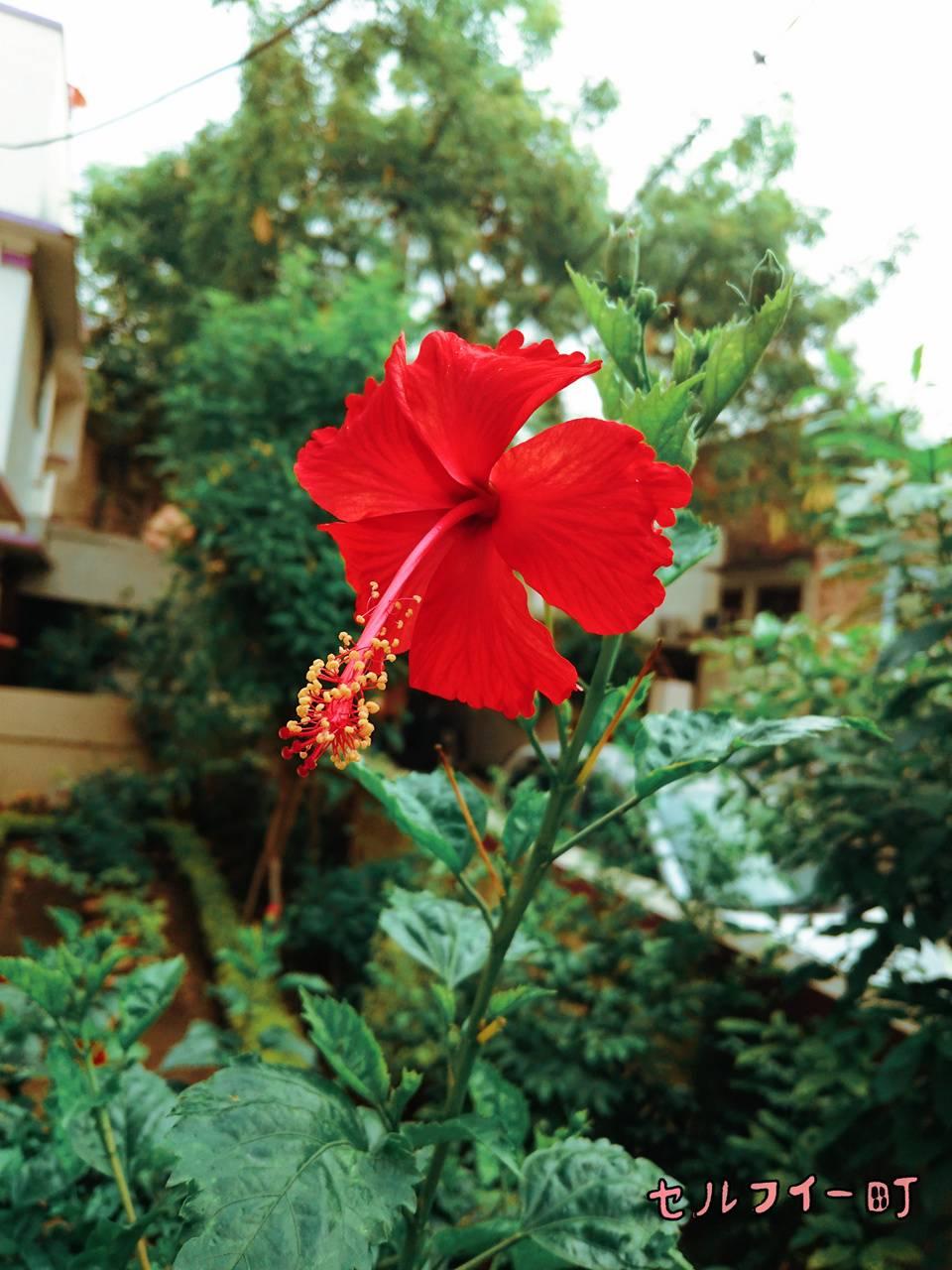 Red Bloom Flower