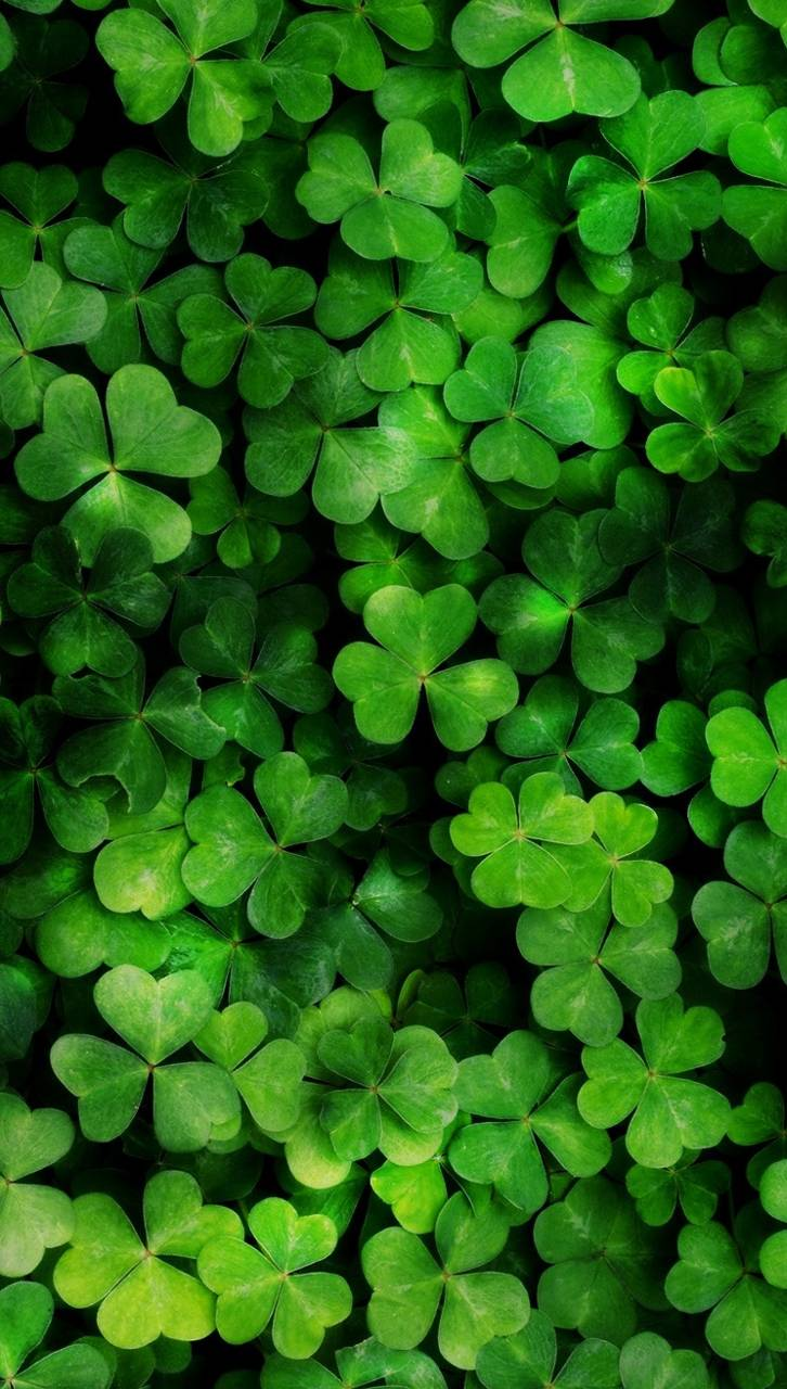 Three Leaf Clover Wallpaper By Markosilveira 69 Free On Zedge