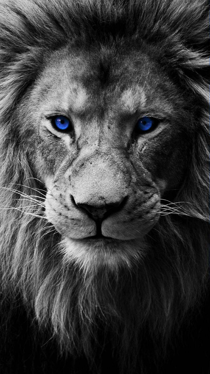 Lion Wallpaper By Beast Chevy05 6b Free On Zedge