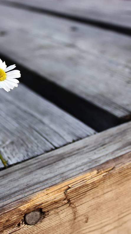 Alone Daisy