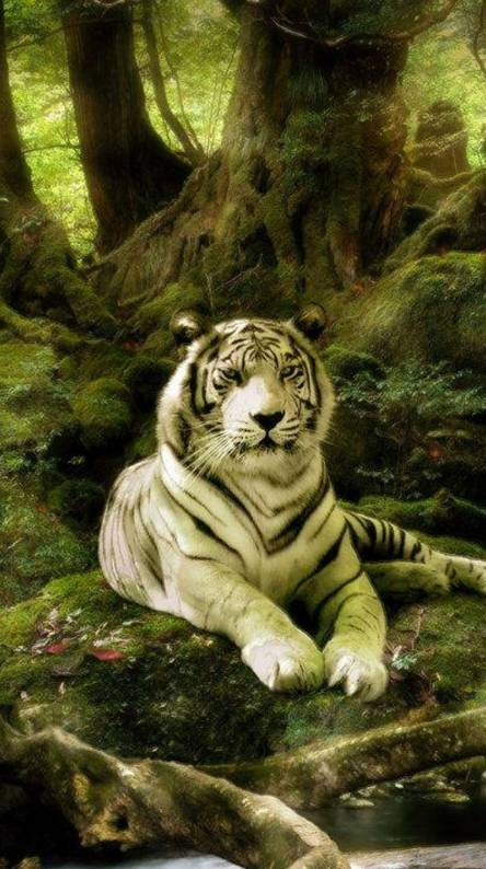 jungle white tiger