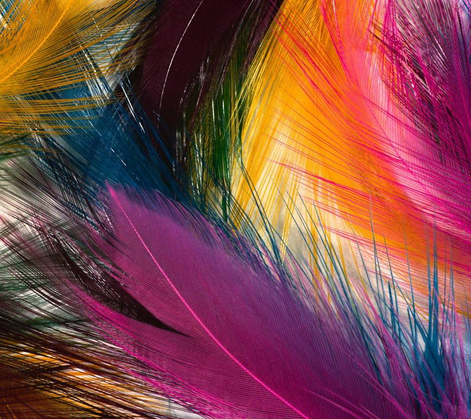 Colorful Plumes