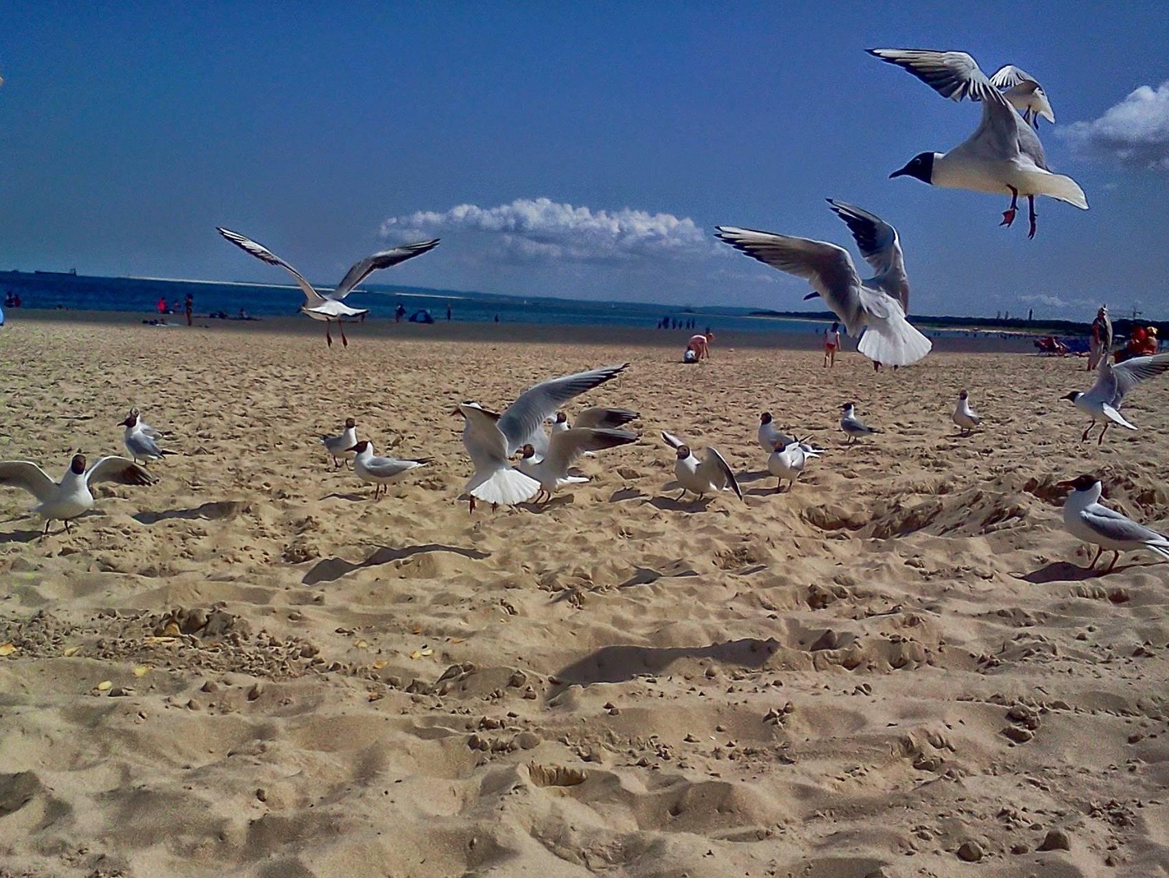 Tern on the Sea