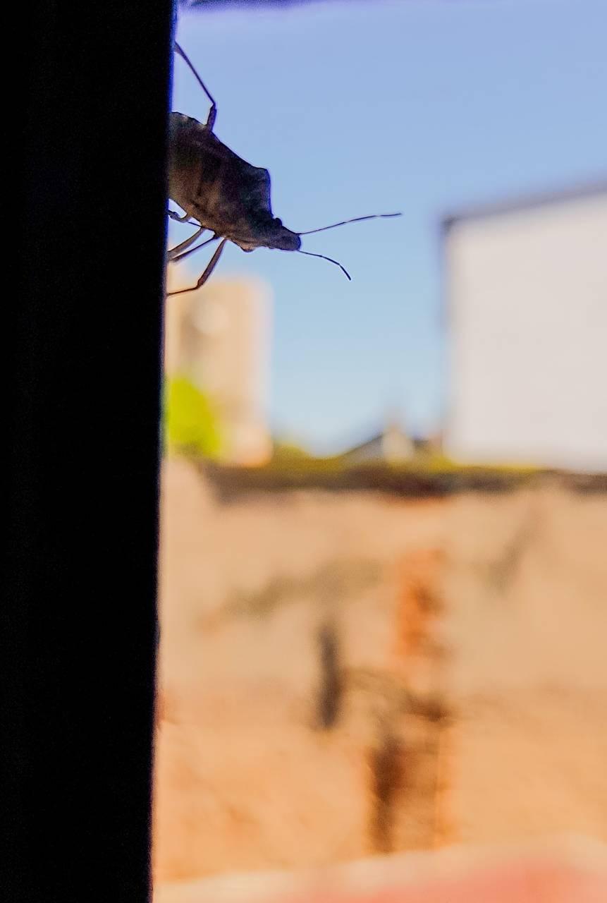 Hello Bug