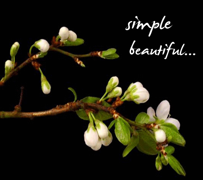 Simple Beautiful