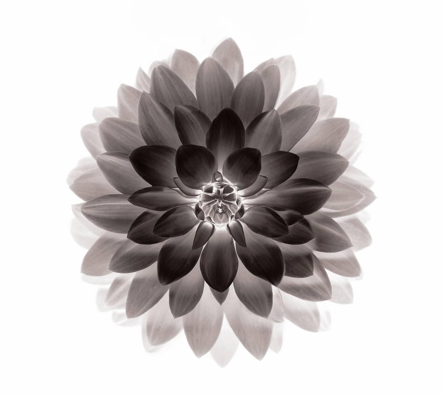 Negative lotus