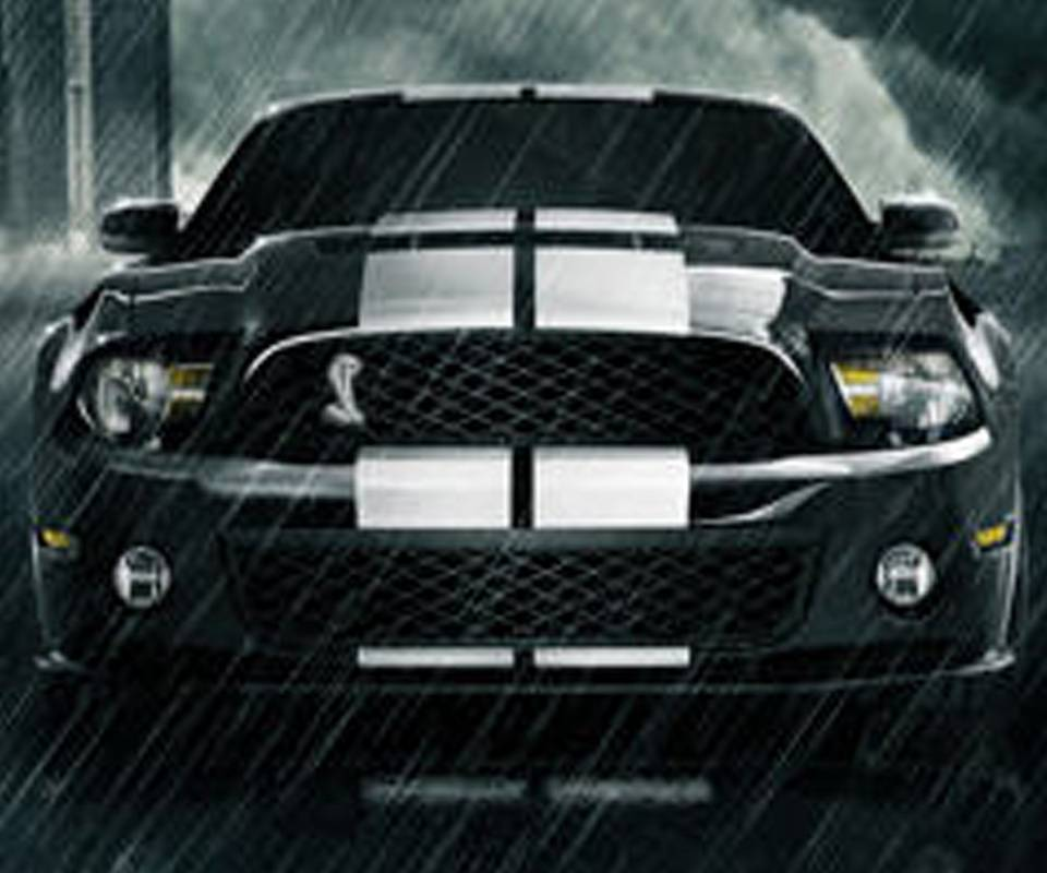 Mustang Shelbi