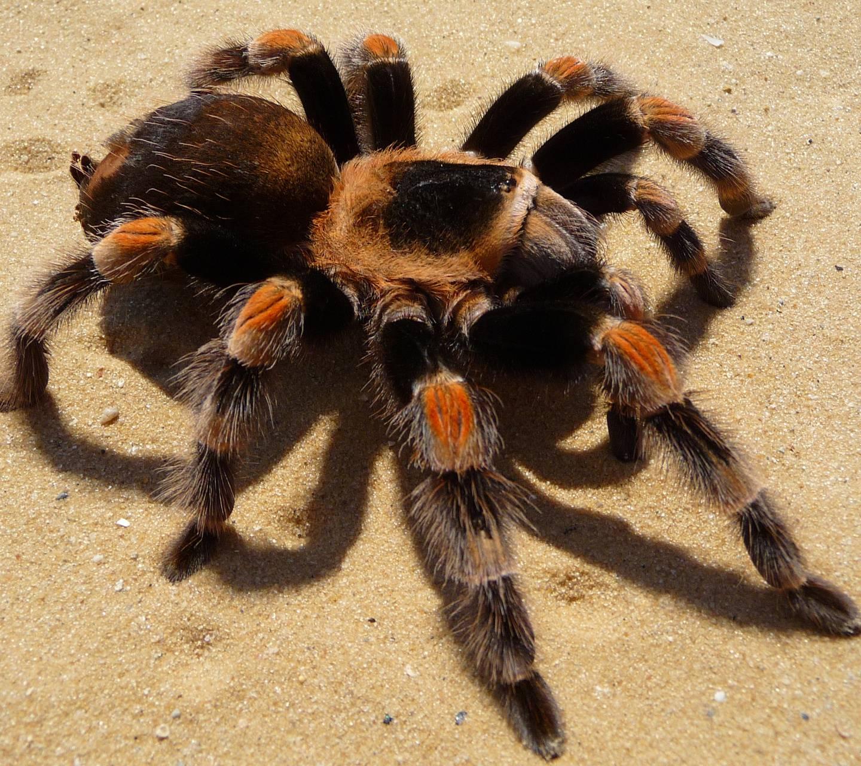 Красивого большого во паука сне видеть