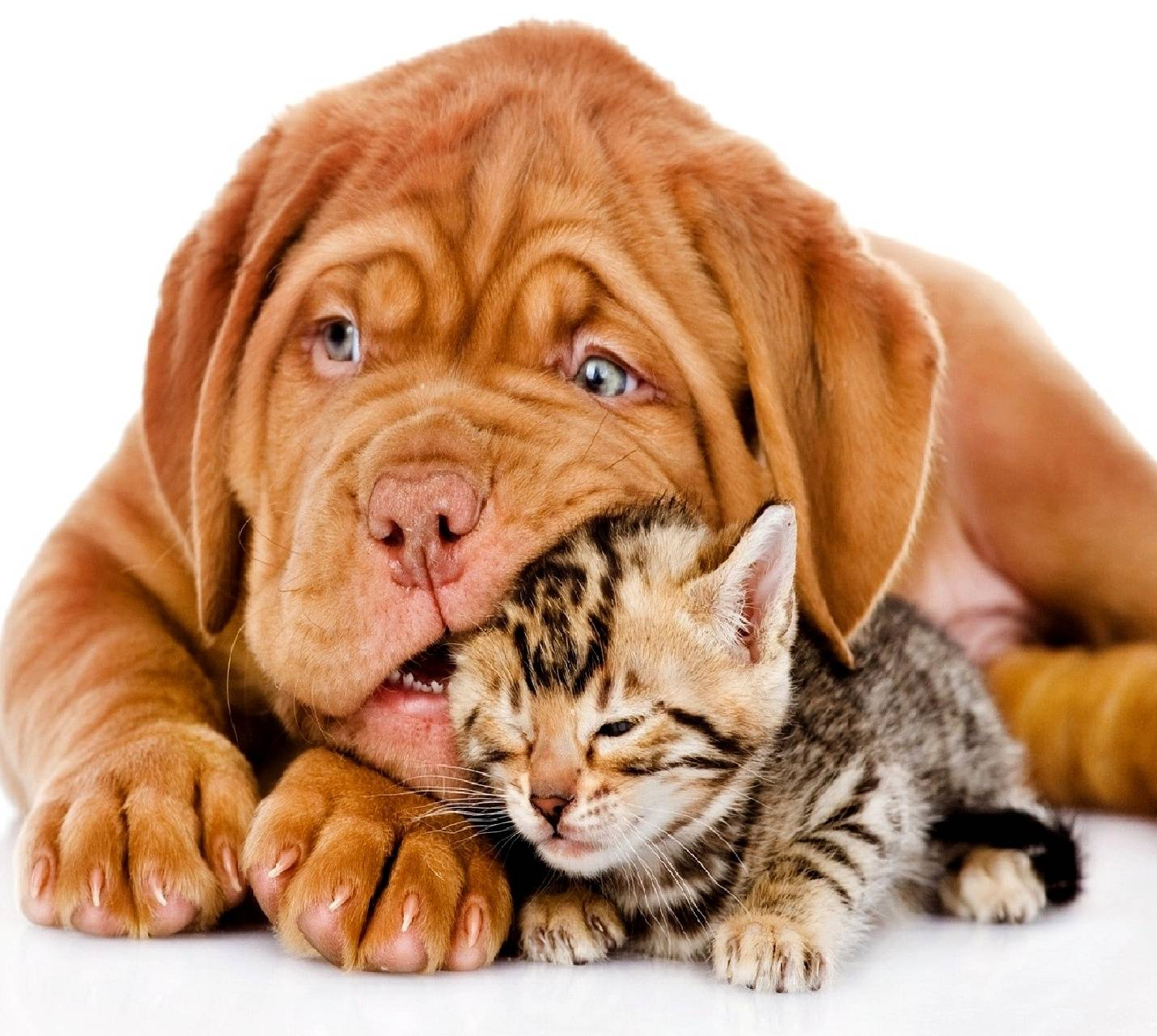 Dog and cat--------