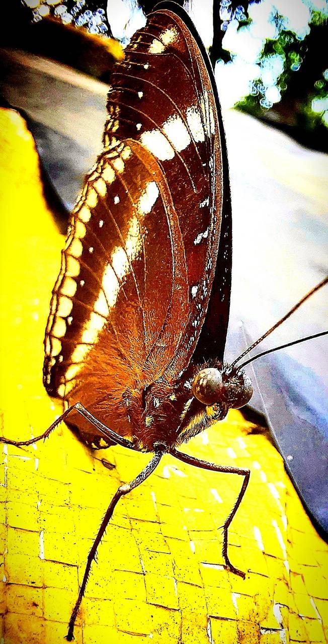 HD Butterfly 4k