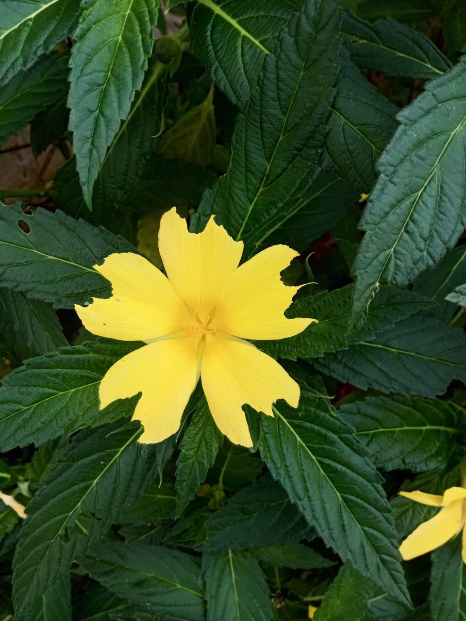 Yellowflower 4k