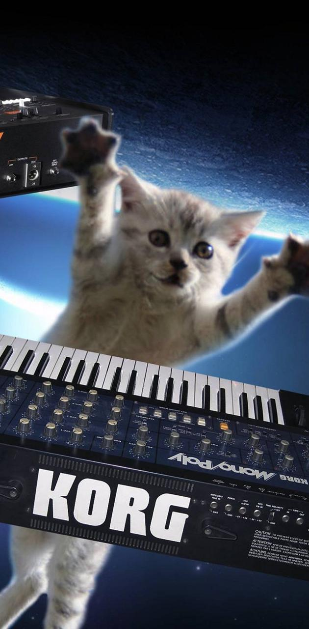 Musical space cats