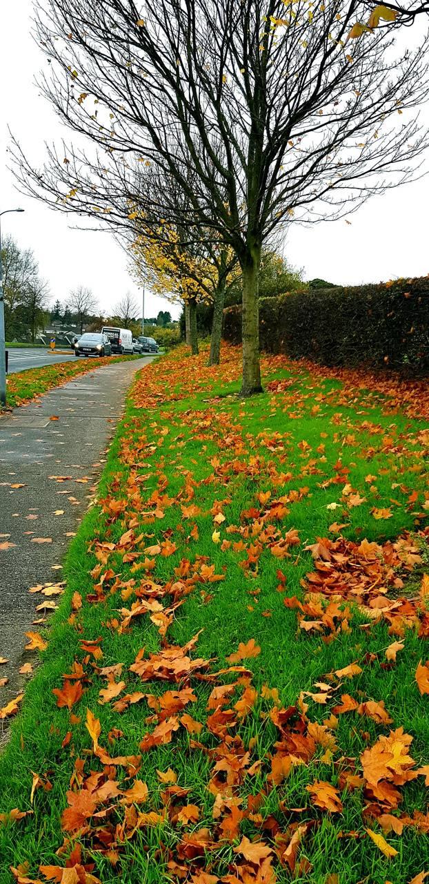4K Autumn Ireland