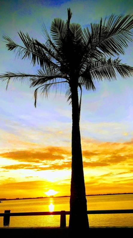 Palmy Sunrise