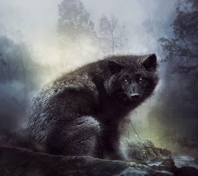 Dark Wolve
