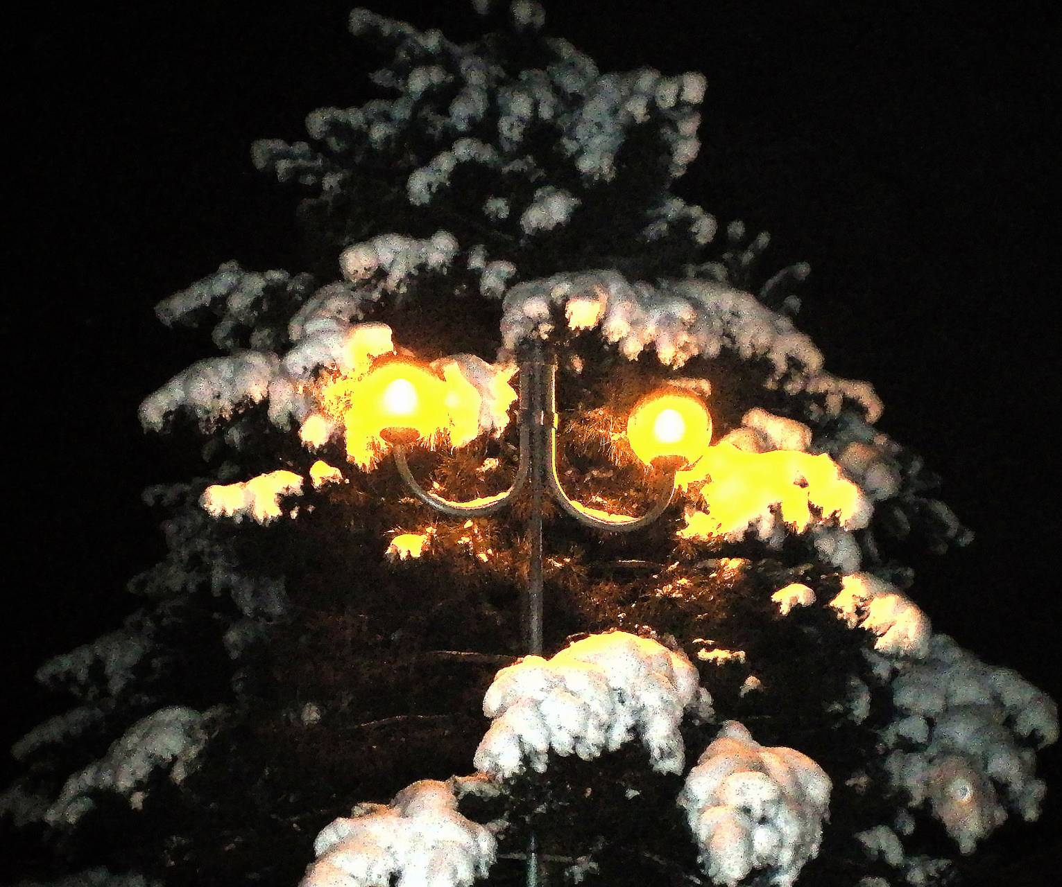 tree and lamp