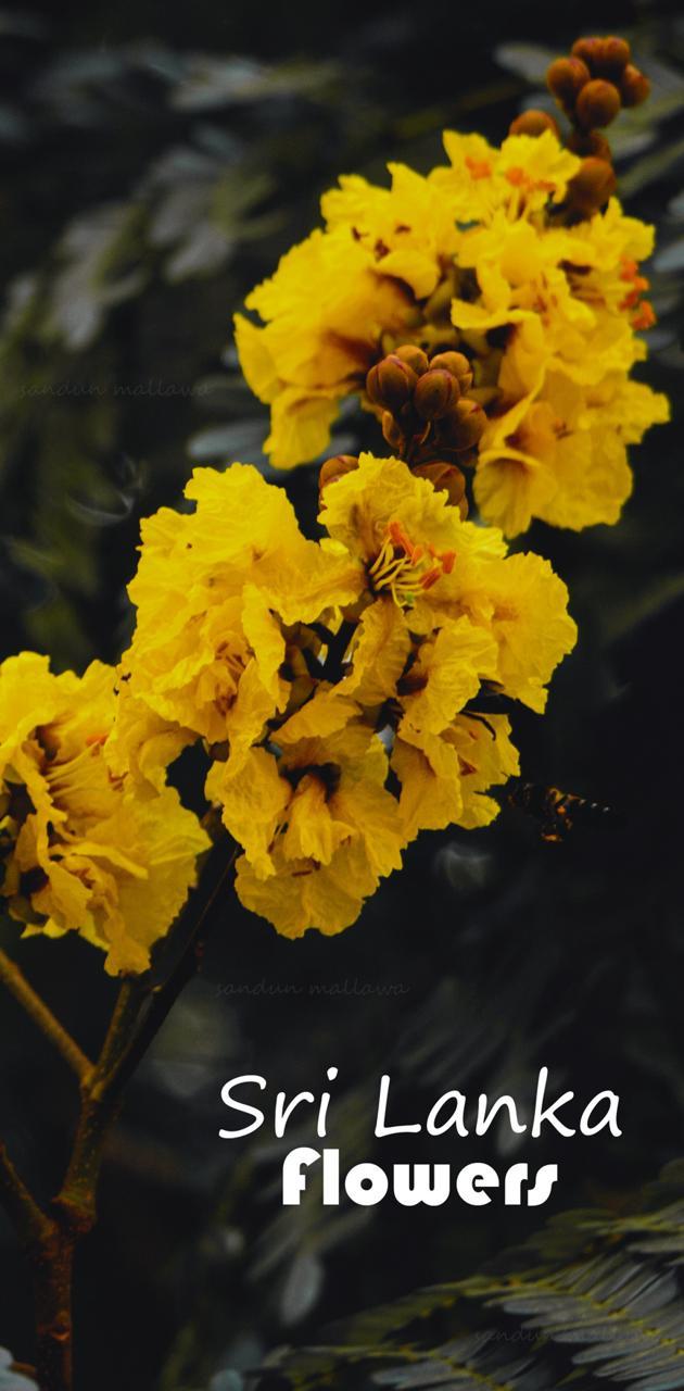 Flowers Sri Lanka