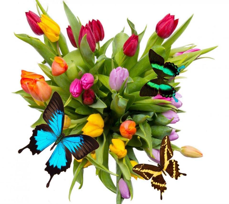 Tulips Butterflies