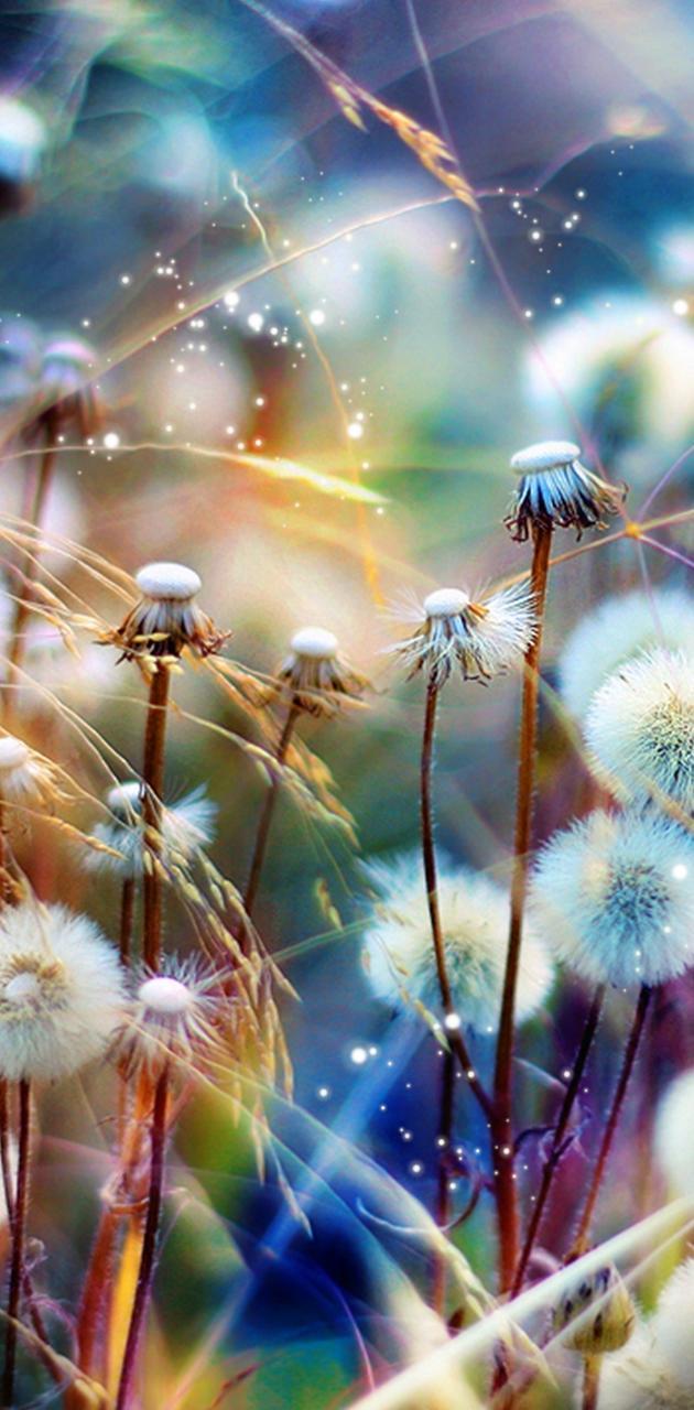 Wishing Fields