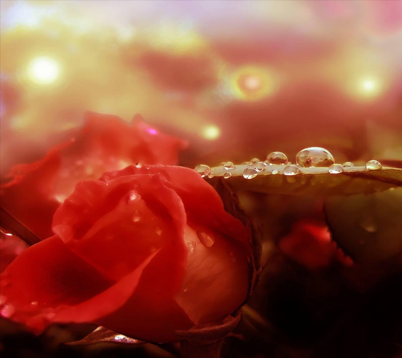 Открытки о счастье и стихи, вера любовь