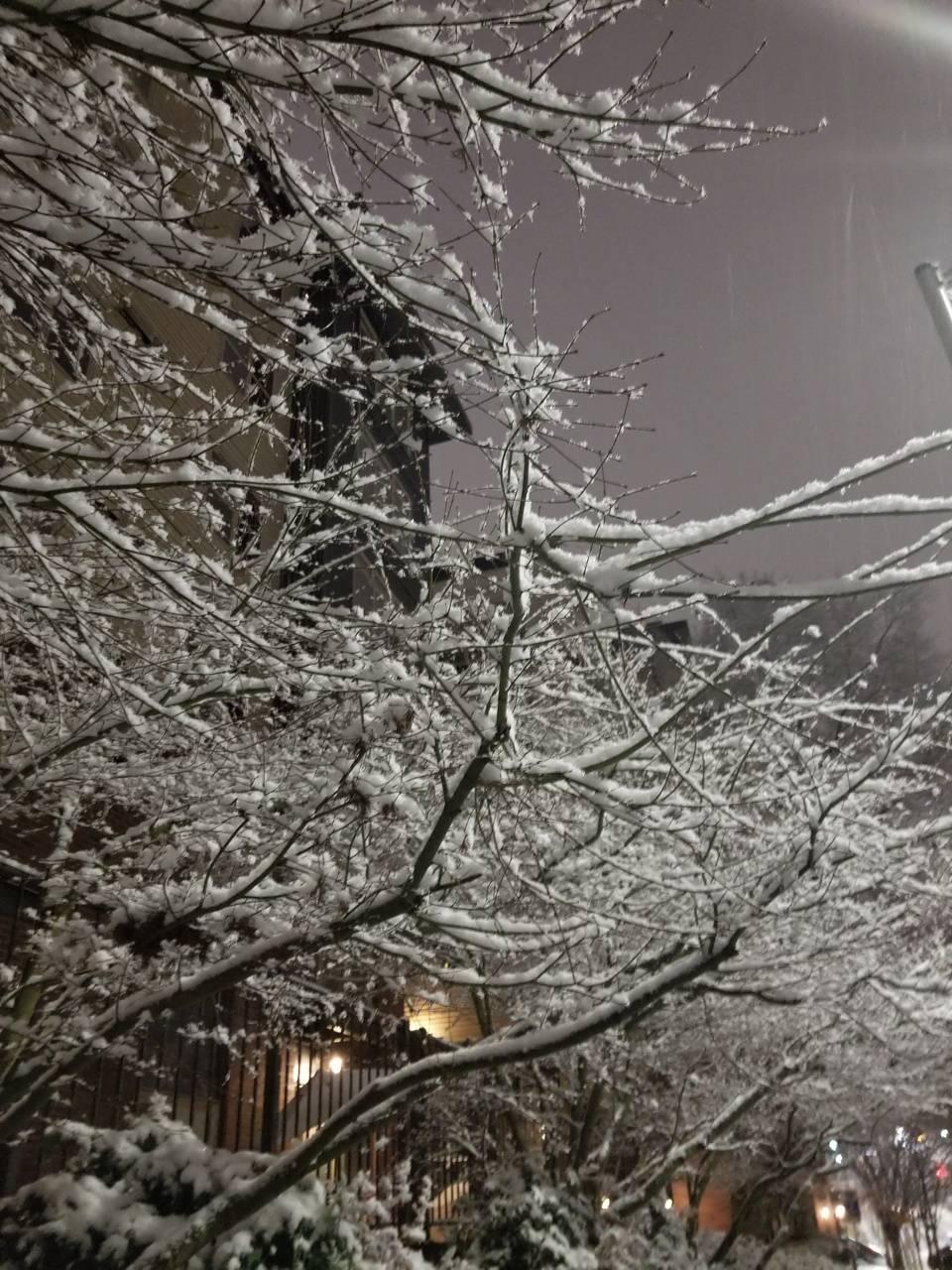 Seattle snow