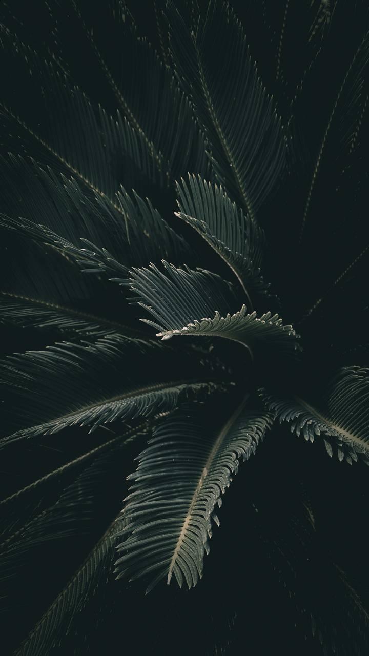 Nature Leaf Walpaper