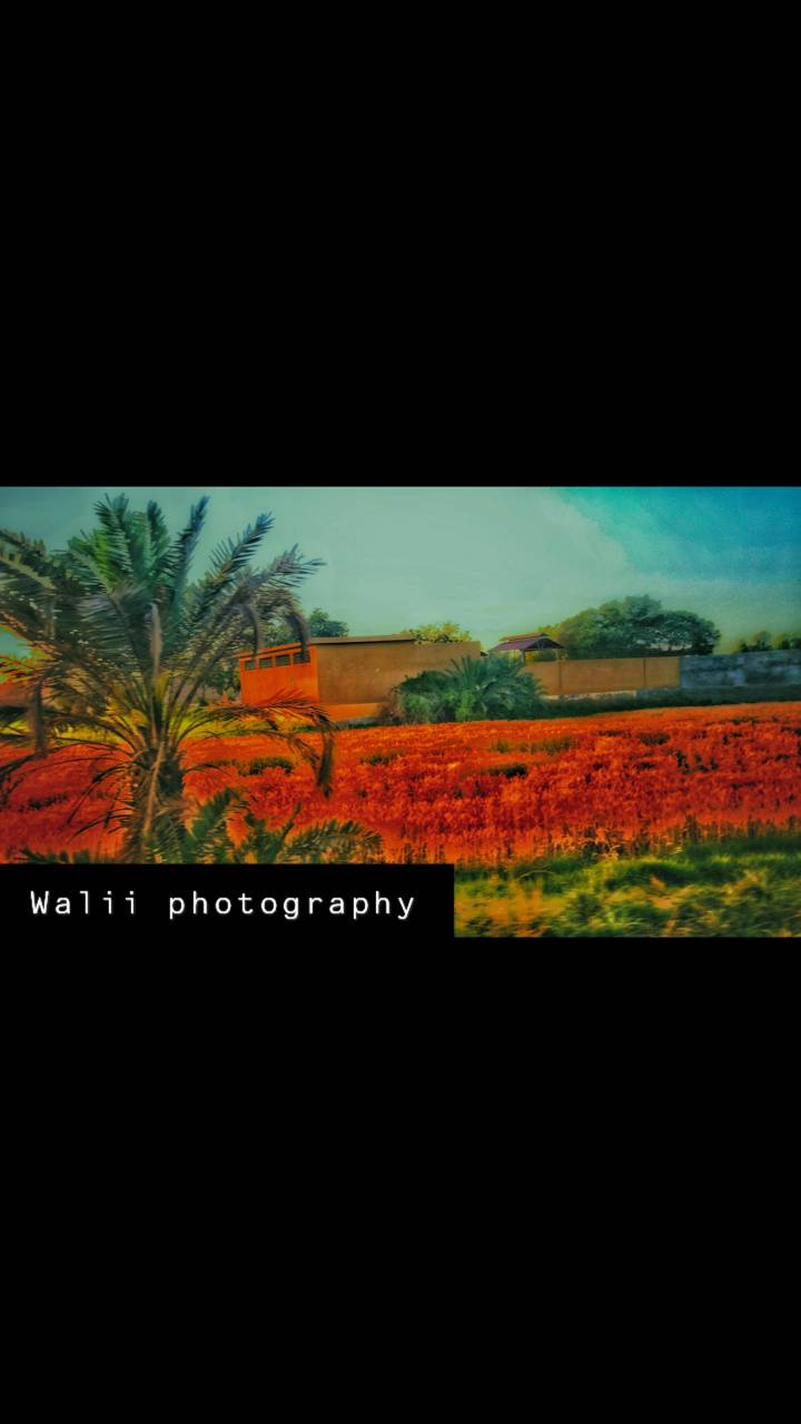 Walii photography