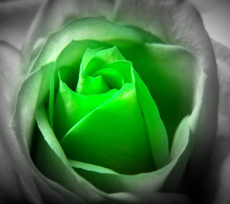 flower glowing