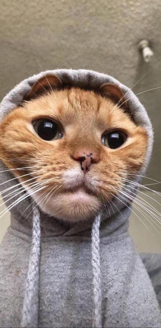Havali Kedi Cat