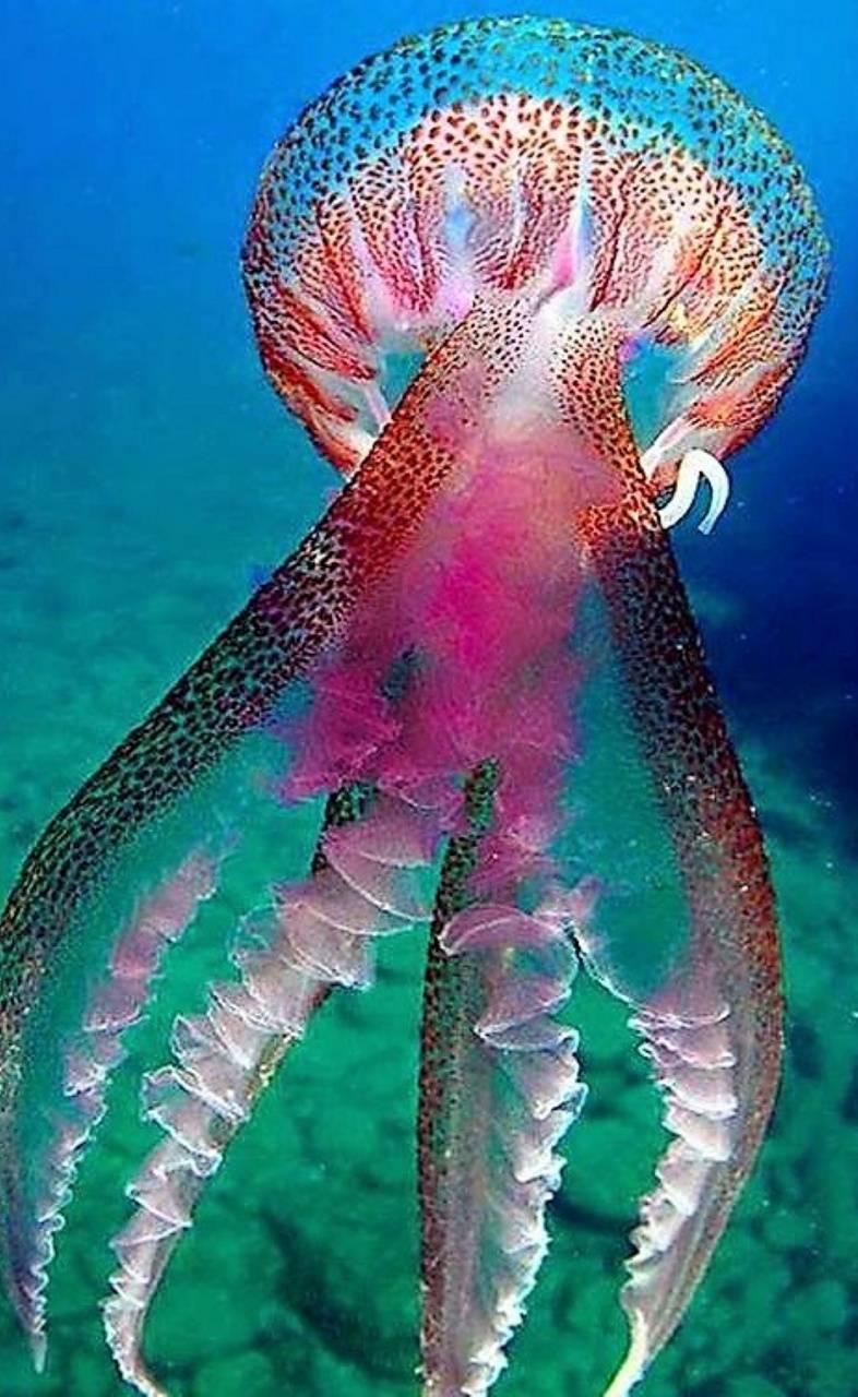 lamp under sea