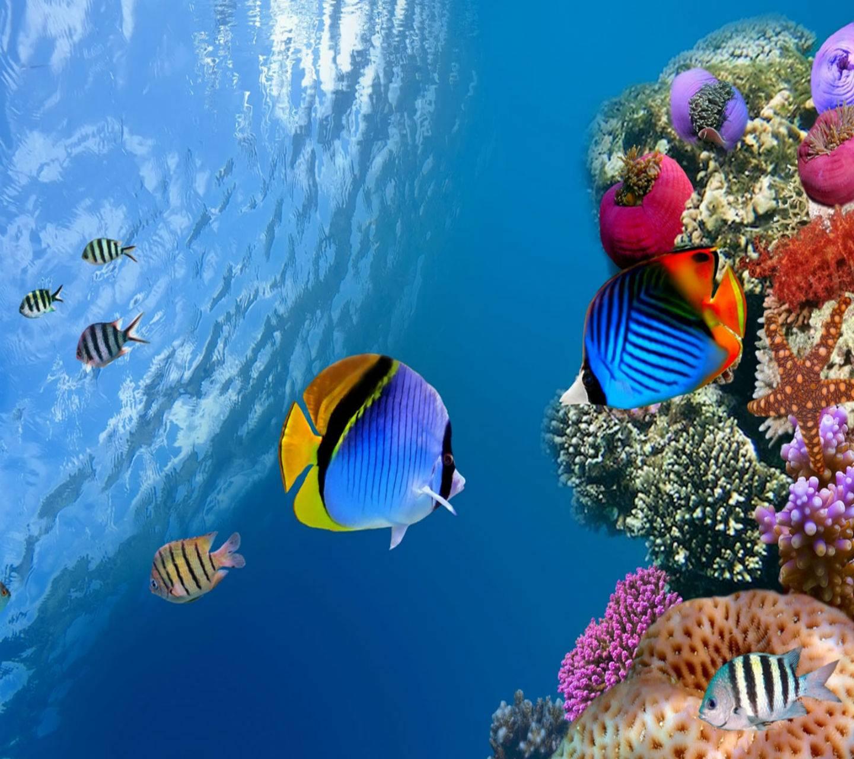 Underwater Life HD