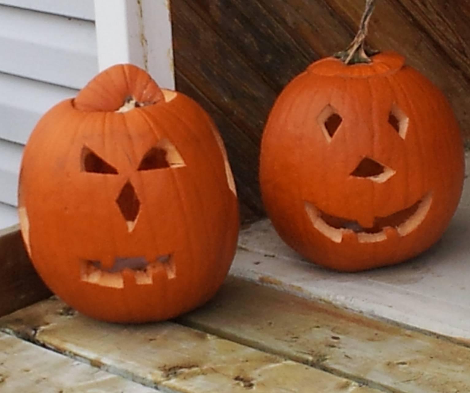Pumpkin Buds