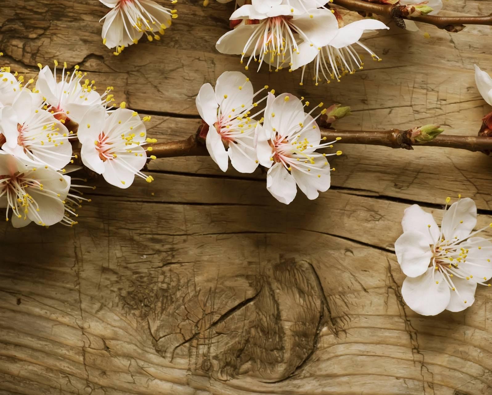 Wood Blossoms