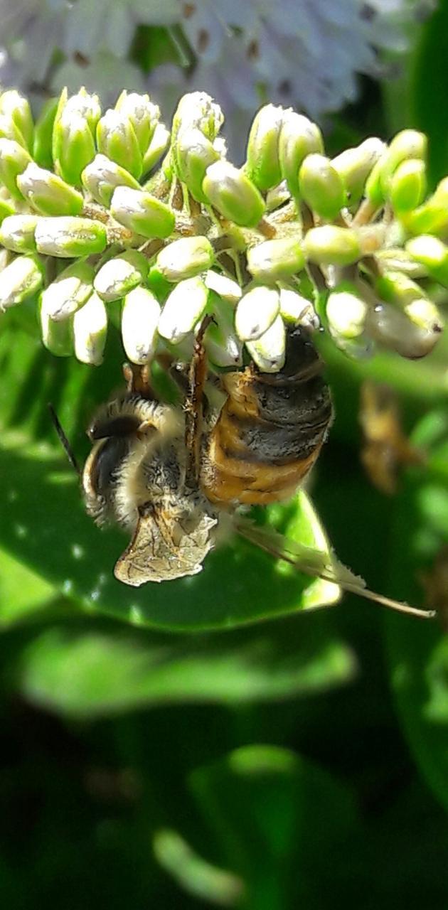 Bee on white flower