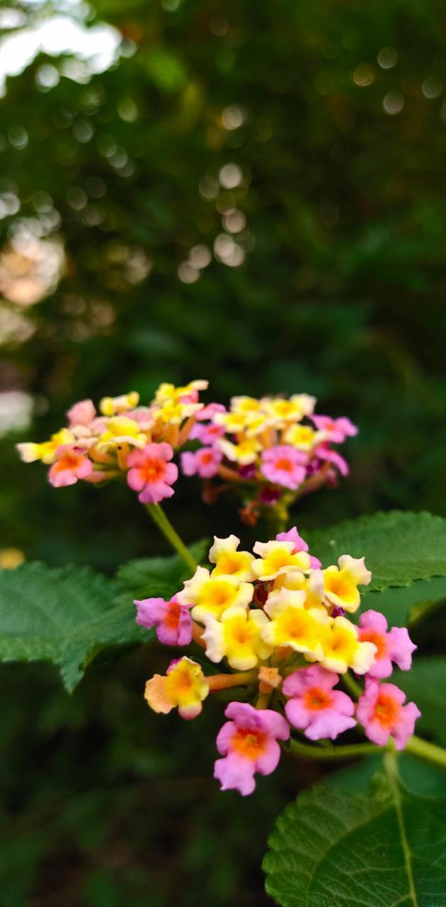 flower123