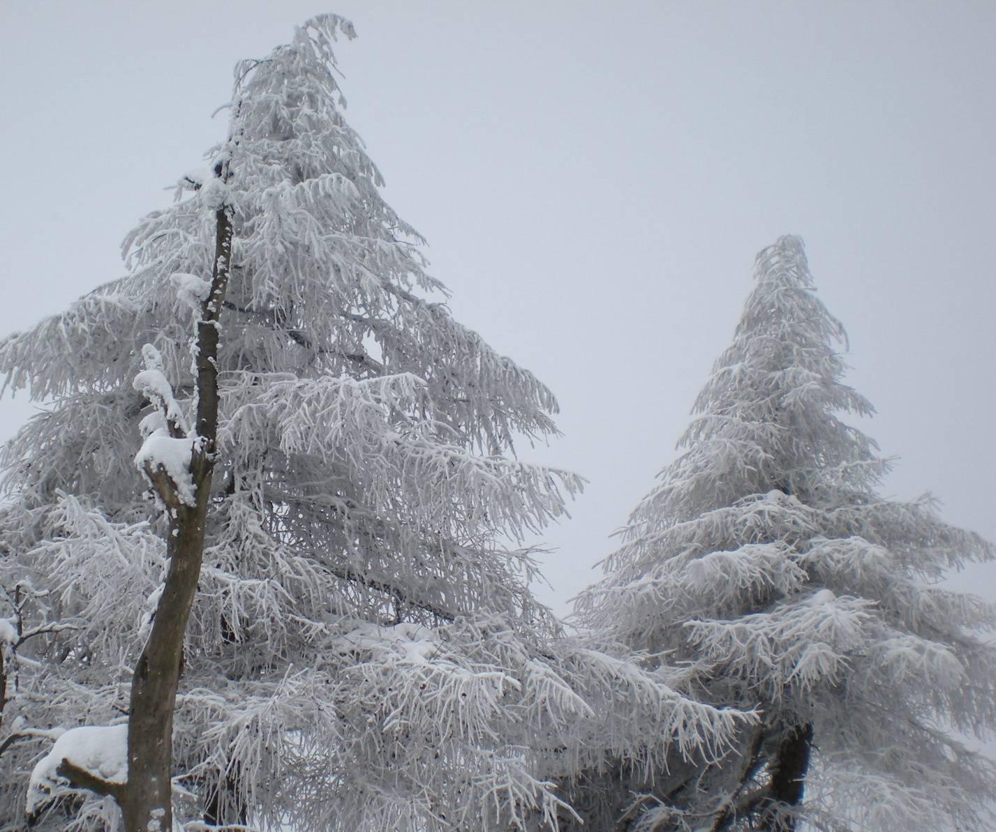 duo tree