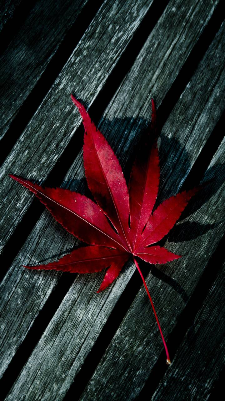 red leaf wallpaperp3tr1t - e1 - free on zedge™