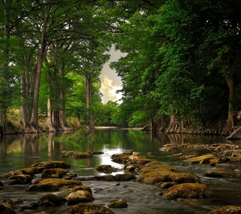 Forrest Lake
