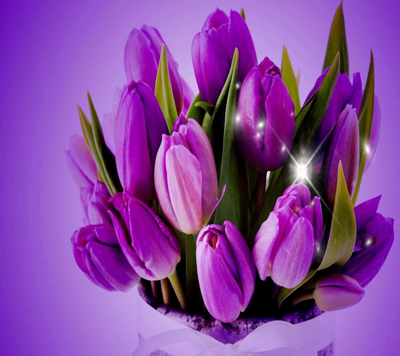 Гиф с тюльпанами