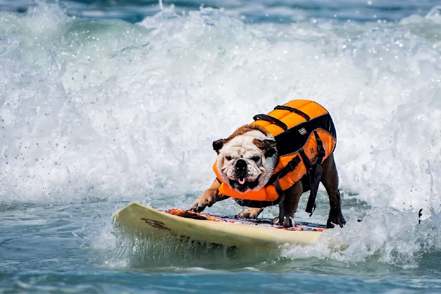 Puppy Baywatch