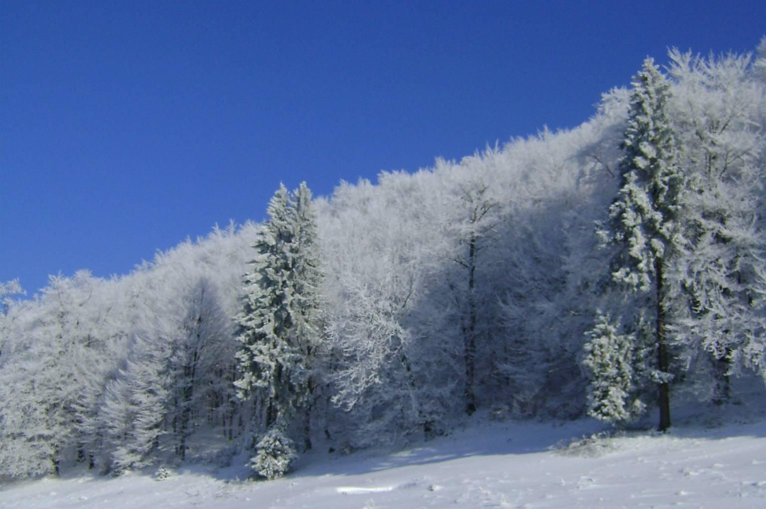 Tree Line Landscape