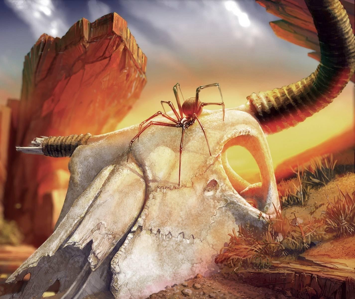 Spider In The Desert