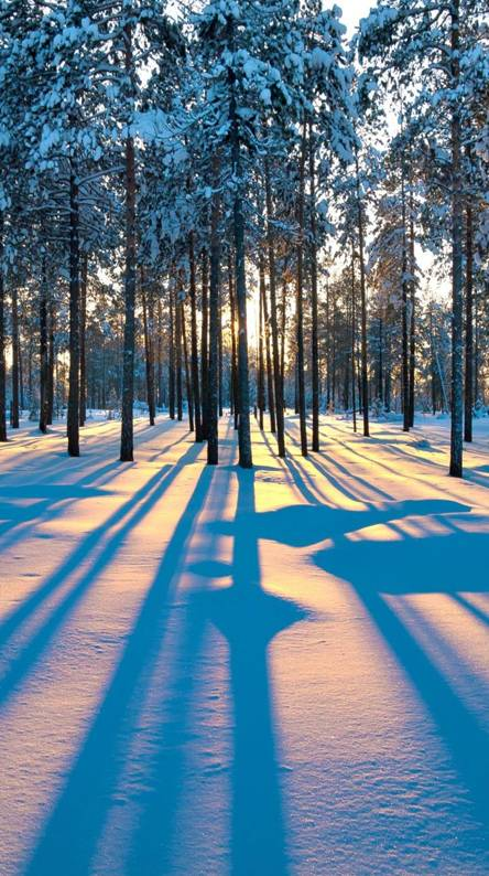 WinterForest Sunrise