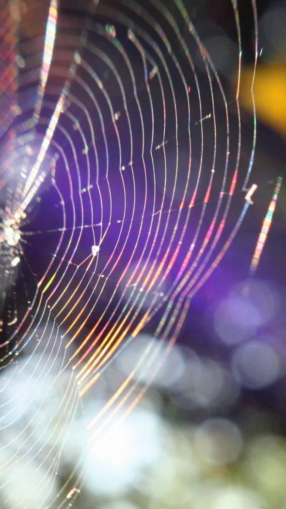 Spider Web Outtake
