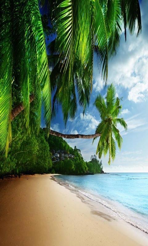 Coast Paradise